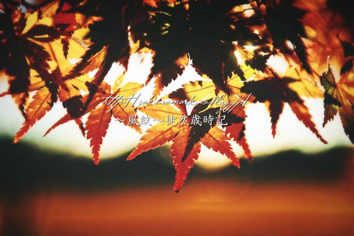 秋の残り香。_f0235723_19380091.jpg