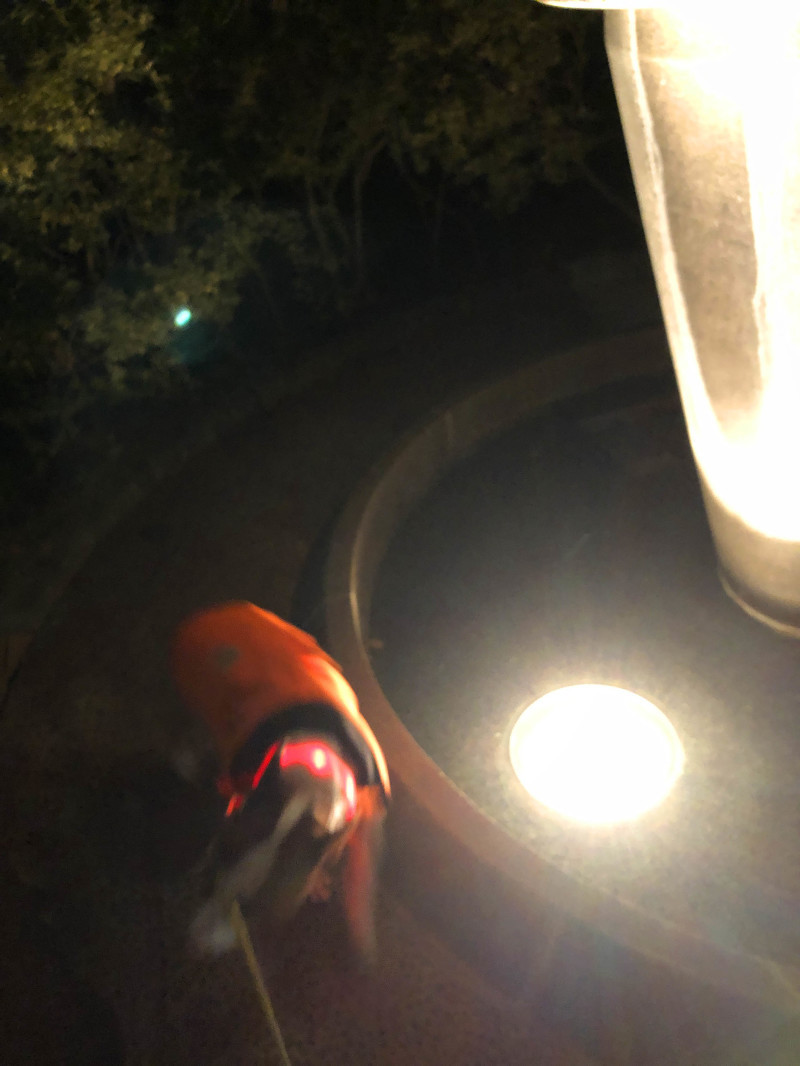 夜は超ショートなお散歩_b0310424_13085249.jpg