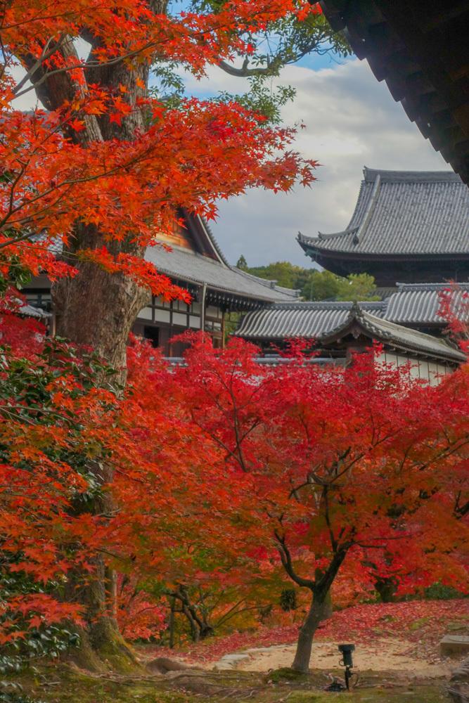 京都2019 その2_c0220824_11135155.jpg