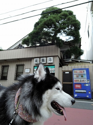 散歩屋日誌【25】_c0062832_15415112.jpg