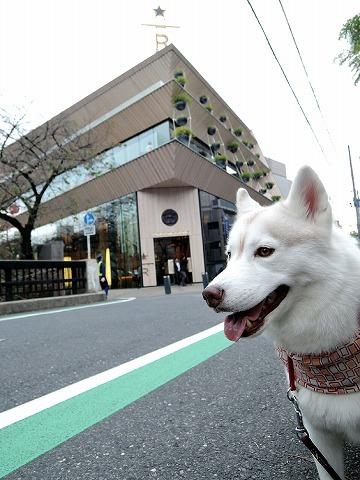 散歩屋日誌【25】_c0062832_15415183.jpg
