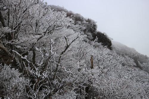 令和元年・大船山御池の霧氷に大感動!_e0272335_2037121.jpg