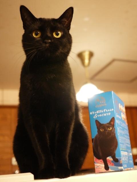 世界にひとつだけの懐石オリジナルパッケージ猫 めりぃぽぴんず編。_a0143140_22123947.jpg