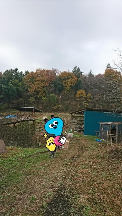 12/1(日)那須いなか村オートキャンプ場_c0388146_07110020.jpg