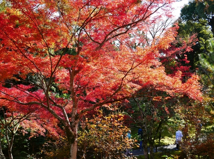 嵯峨・嵐山めぐり、3、天竜寺  2019-12-08 00:00    _b0093754_22012194.jpg