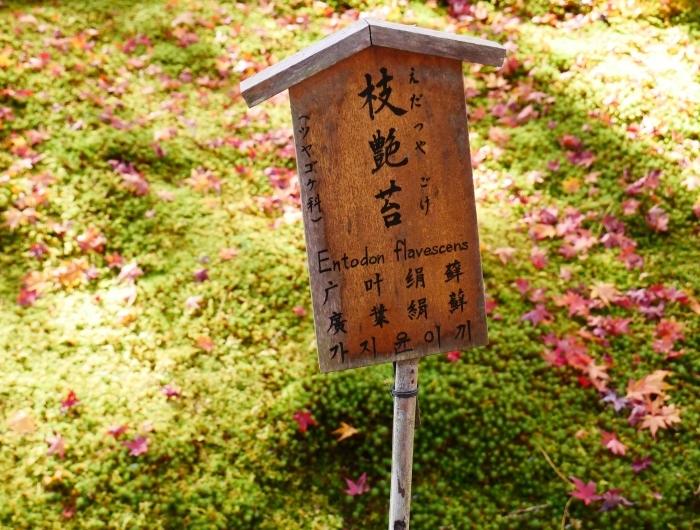 嵯峨・嵐山めぐり、3、天竜寺  2019-12-08 00:00    _b0093754_22014335.jpg