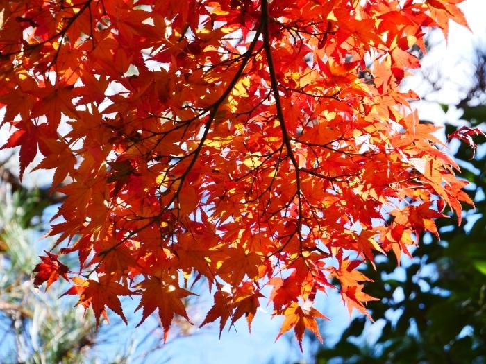 嵯峨・嵐山めぐり、3、天竜寺  2019-12-08 00:00    _b0093754_22364516.jpg