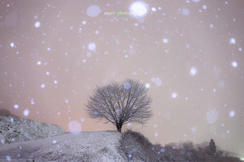 雪降る夜に_d0357855_22053490.jpeg