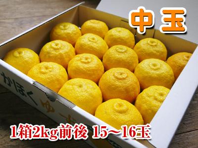 令和元年度の香り高き柚子『あっぱれ』数量限定再入荷します!『冬至用柚子』残りわずかですお急ぎ下さい!!_a0254656_17220288.jpg