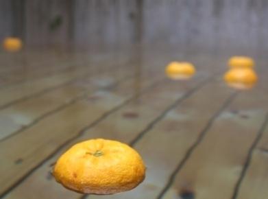 令和元年度の香り高き柚子『あっぱれ』数量限定再入荷します!『冬至用柚子』残りわずかですお急ぎ下さい!!_a0254656_17412065.jpg
