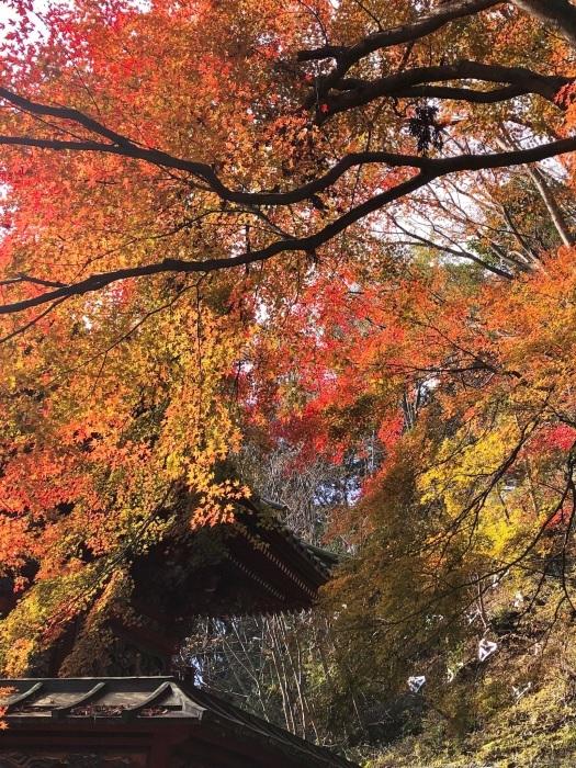 紅葉の高尾山へ🍁_a0092659_00112052.jpg