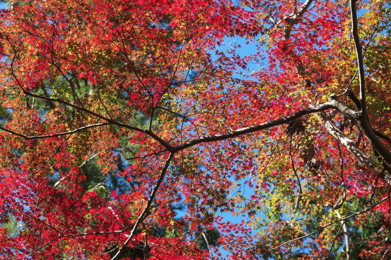 紅葉 成田山公園_b0044477_22530226.jpg
