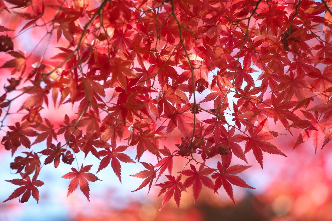 紅葉 成田山公園_b0044477_22531556.jpg