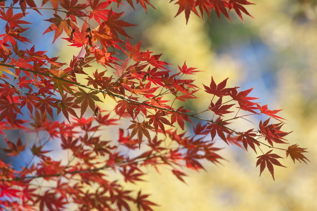 紅葉 成田山公園_b0044477_22540085.jpg