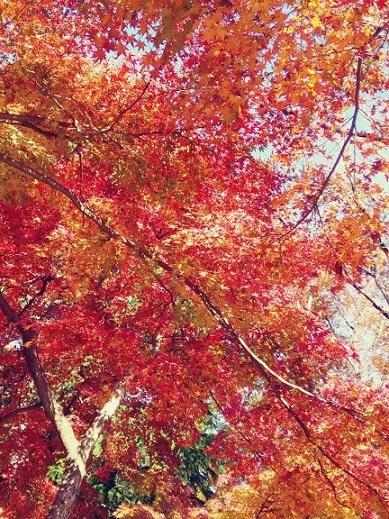 紅葉の井之頭公園_b0117785_14512021.jpg