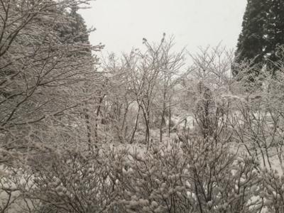 雪 積もりました_a0096989_13392633.jpg