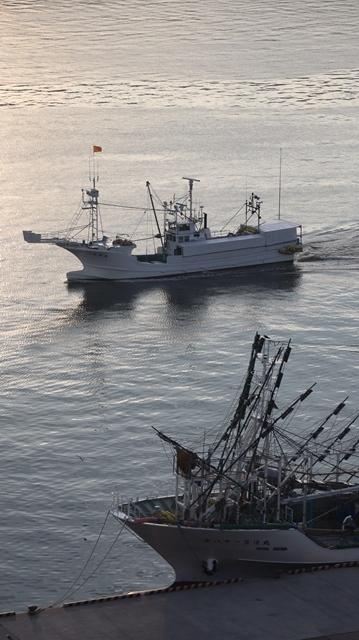 サンマの不漁が食卓を寂しくする。多獲性魚類の美味しさと健康への寄与、サンマ、いわし、サバは大切な栄養剤_d0181492_00364183.jpg