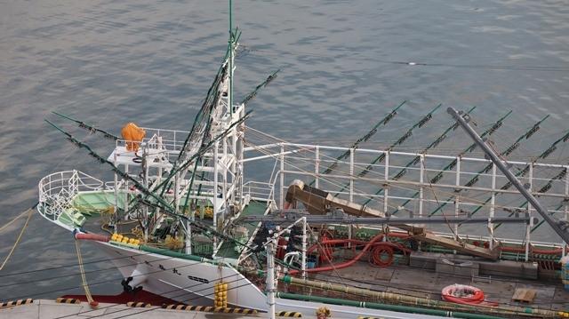 サンマの不漁が食卓を寂しくする。多獲性魚類の美味しさと健康への寄与、サンマ、いわし、サバは大切な栄養剤_d0181492_00371178.jpg