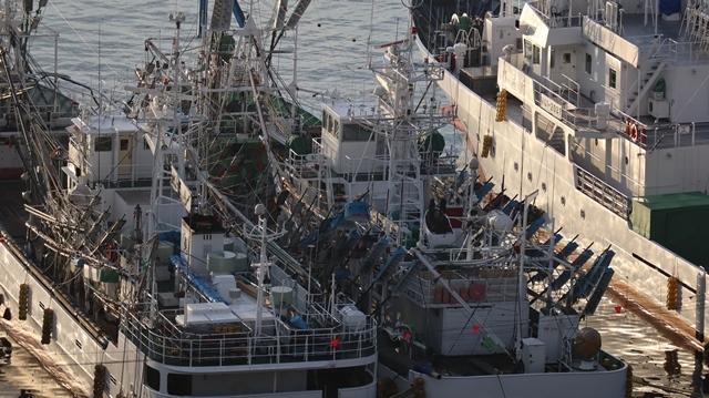 サンマの不漁が食卓を寂しくする。多獲性魚類の美味しさと健康への寄与、サンマ、いわし、サバは大切な栄養剤_d0181492_00392920.jpg