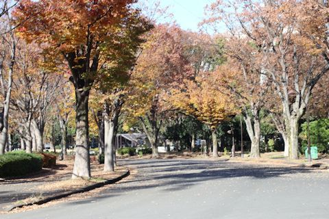 秋色散歩♪_c0090198_18044955.jpg
