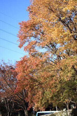 秋色散歩♪_c0090198_18053404.jpg
