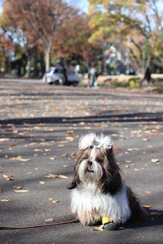 秋色散歩♪_c0090198_18091343.jpg