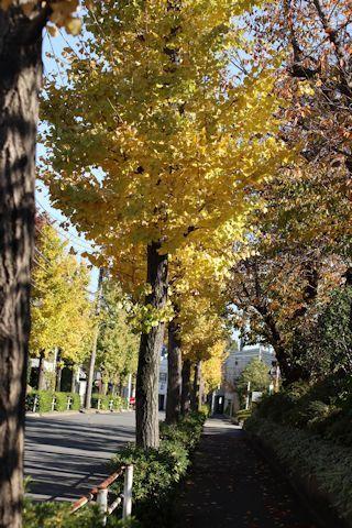 秋色散歩♪_c0090198_18103029.jpg