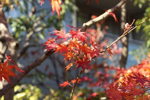 秋色散歩♪_c0090198_18105087.jpg