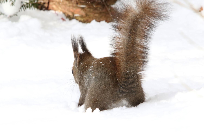 寒くても元気① 森のエゾリス_c0360399_20202140.jpg