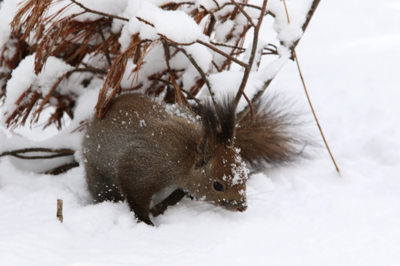 寒くても元気① 森のエゾリス_c0360399_20205256.jpg