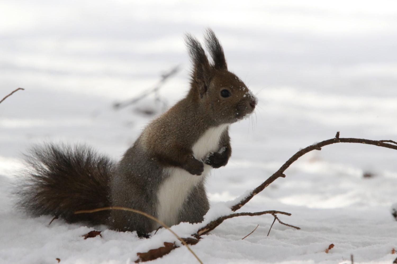 寒くても元気① 森のエゾリス_c0360399_20212839.jpg