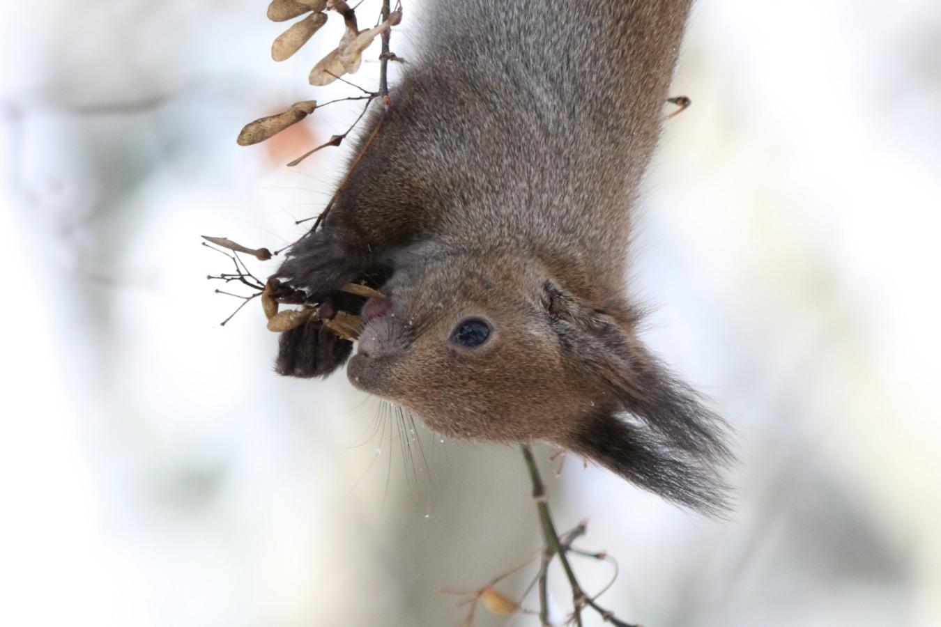 寒くても元気① 森のエゾリス_c0360399_20301130.jpg