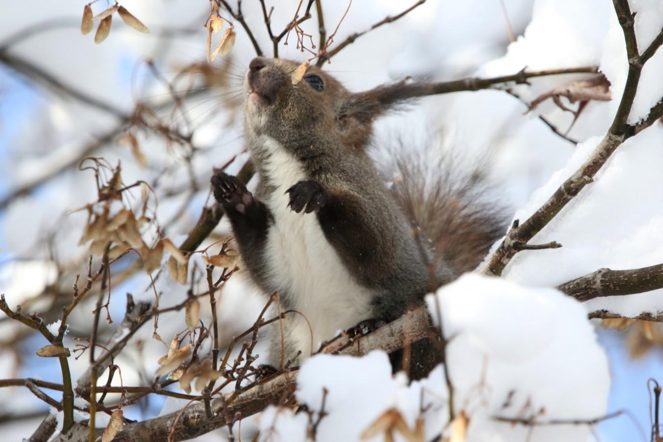 寒くても元気① 森のエゾリス_c0360399_20332496.jpg