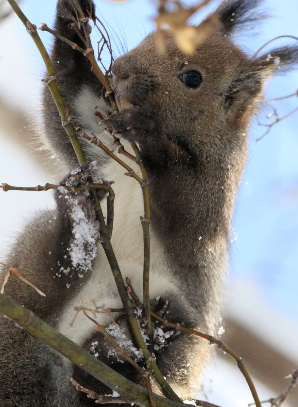 寒くても元気① 森のエゾリス_c0360399_20334698.jpg