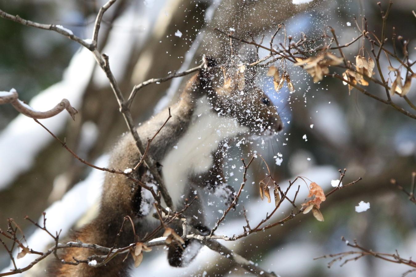 寒くても元気① 森のエゾリス_c0360399_21335881.jpg