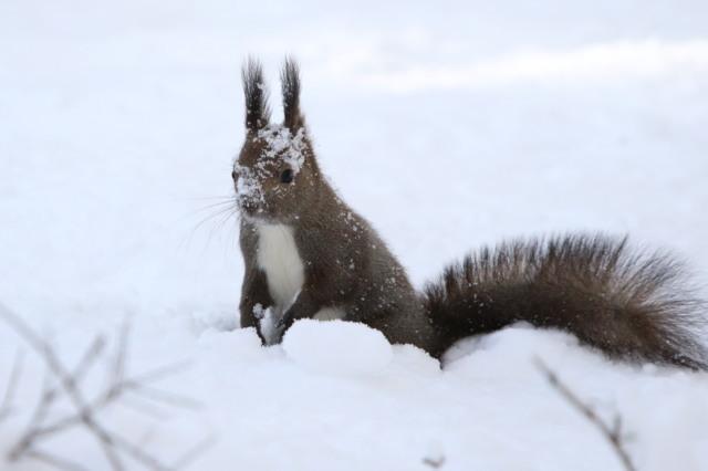 寒くても元気① 森のエゾリス_c0360399_21520331.jpg