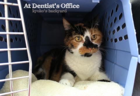 Whitneyさん、歯医者に行く_b0253205_06140307.jpg