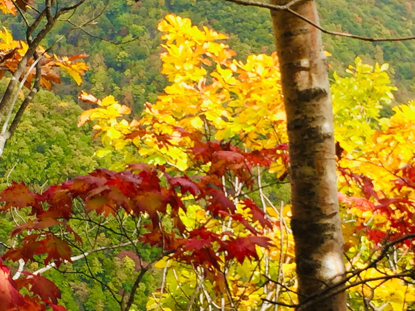 "2019年10月 『北海道の秋、10月 その1』  October 2019 ""The Autumn of Hokkaido, October #1\""_c0219616_17370532.jpg"