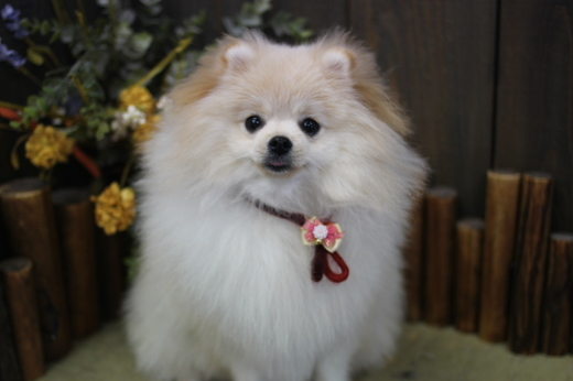 12月4日ご来店のワンちゃんです!!_b0130018_09535483.jpg