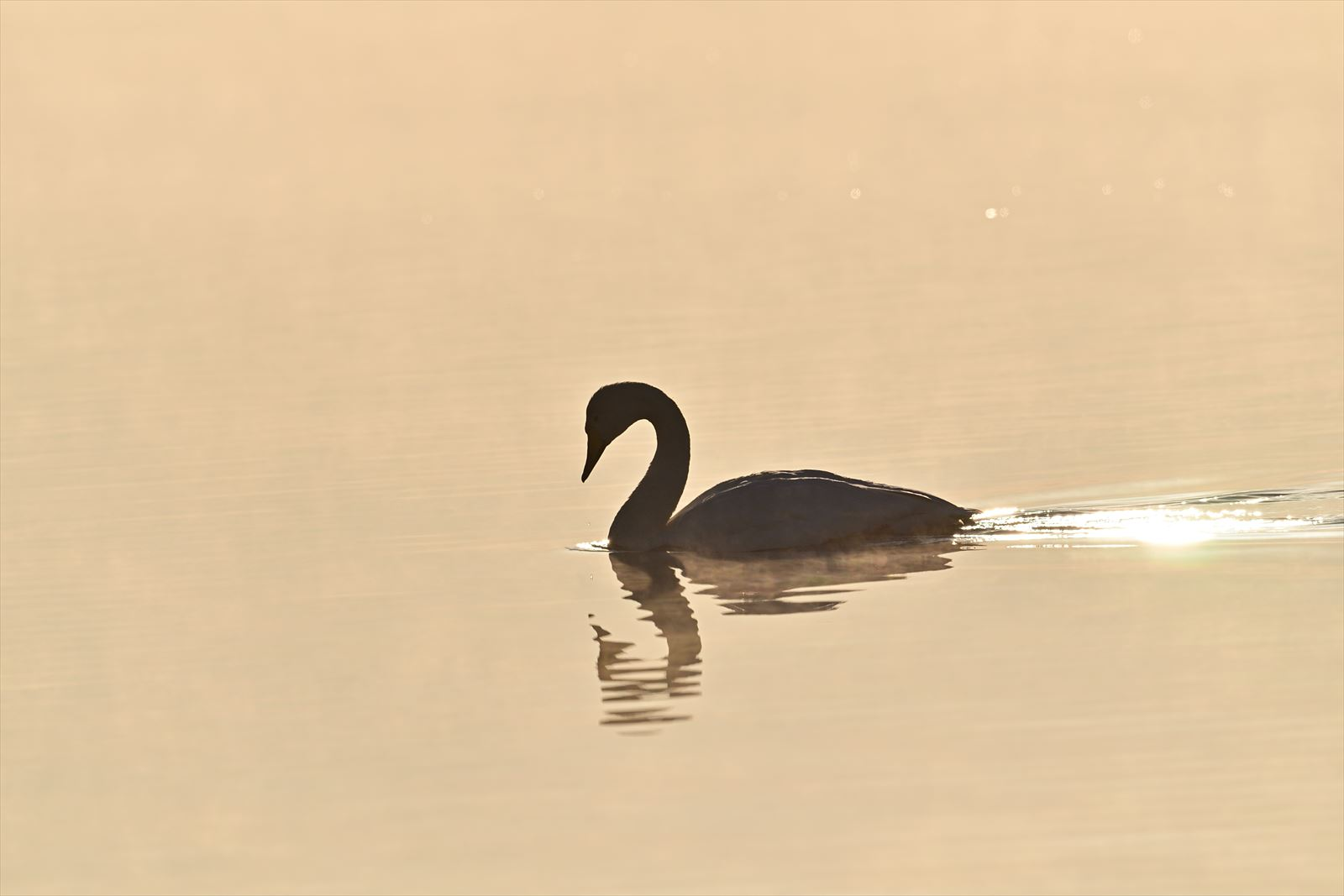 白鳥の湖_a0145819_13255395.jpg