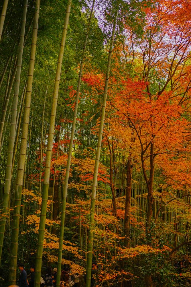 京都2019 その3_c0220824_11410704.jpg