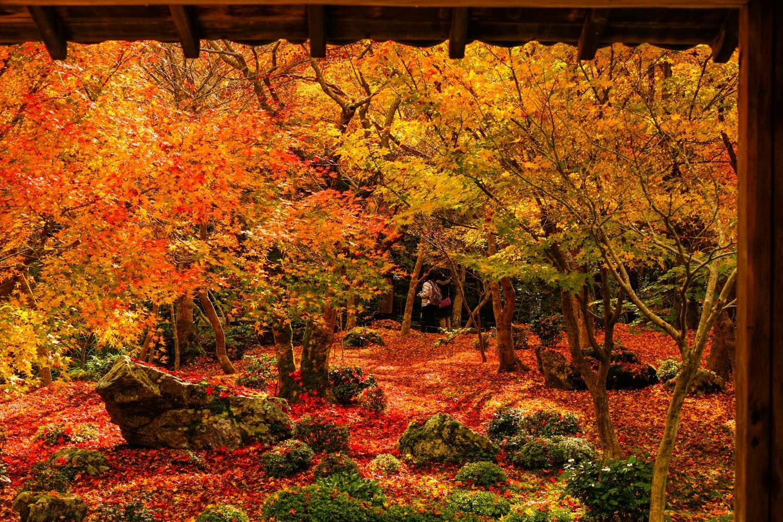 京都2019 その3_c0220824_11410754.jpg