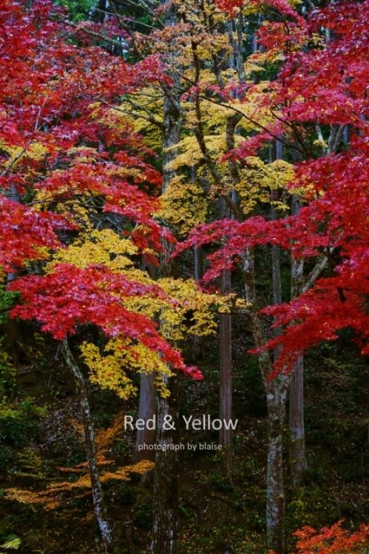 赤と黄色_d0165225_00091837.jpg