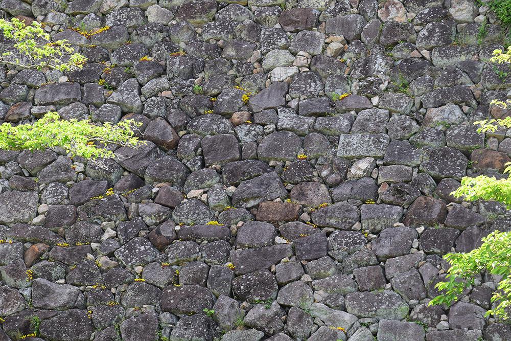 丹波国篠山城跡を歩く。 その1 ~内堀~_e0158128_16213026.jpg