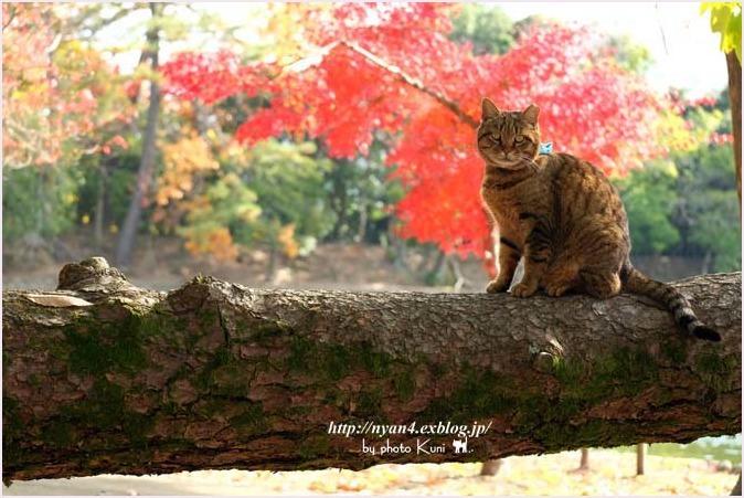 トラ君と池と紅葉_f0166234_09135861.jpg