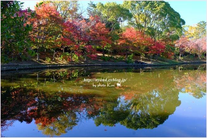トラ君と池と紅葉_f0166234_09142305.jpg