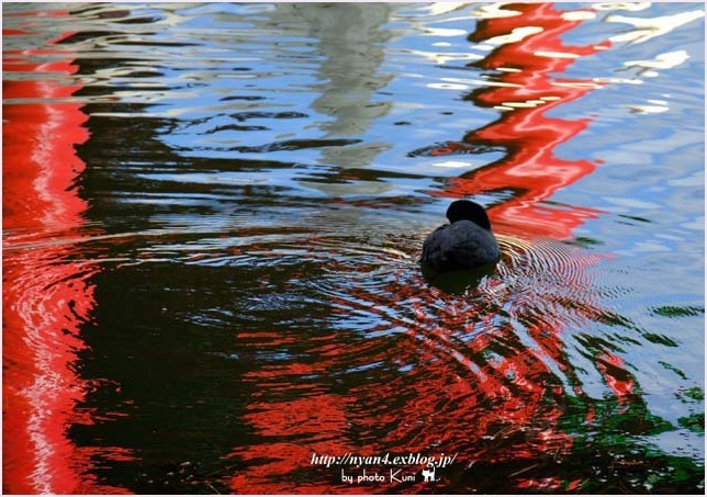 トラ君と池と紅葉_f0166234_09143934.jpg