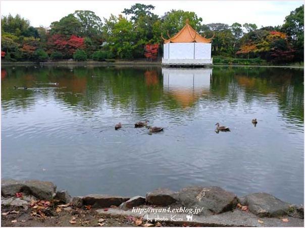 トラ君と池と紅葉_f0166234_09173113.jpg
