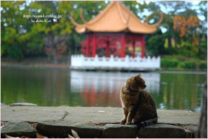 トラ君と池と紅葉_f0166234_09174026.jpg