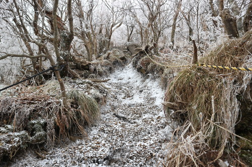令和元年・大船山御池の霧氷に大感動!_e0272335_5372678.jpg